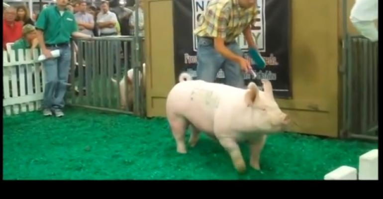 Yorkshire Boar Sells for Record-Setting $270,000