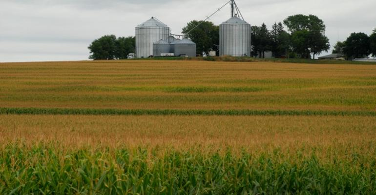 crop report good news for pork producers