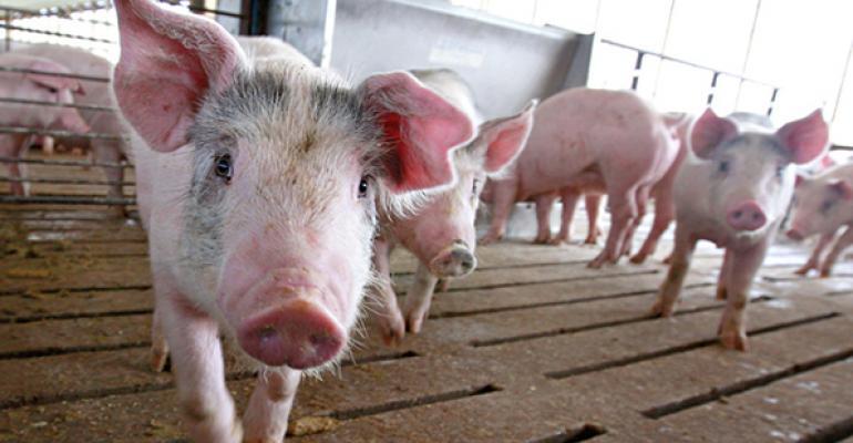 Belarus' Government Dissatisfied with Pork Production Restoration Efforts