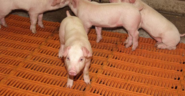 National Pork Board Funds New Swine Health Information Center