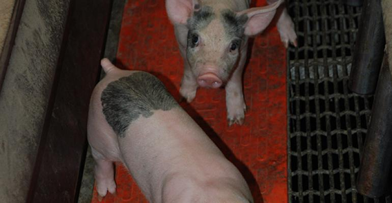Pre-report survey confirms most are expecting growth in hog numbers in report