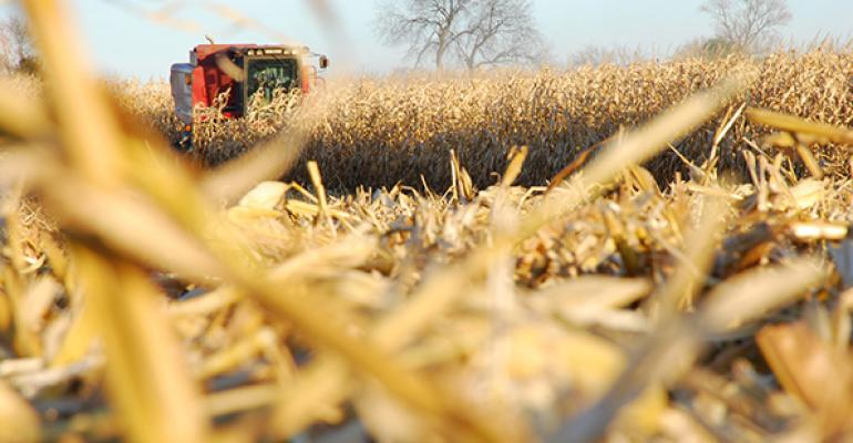 USDA projects corn, bean crops to be down