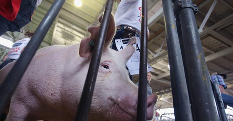 Wisconsin reissues spring pig weigh-in ban