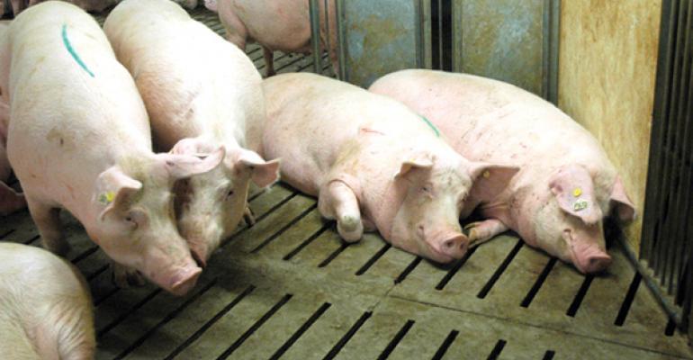 4 factors to consider when raising antibiotic-free pigs