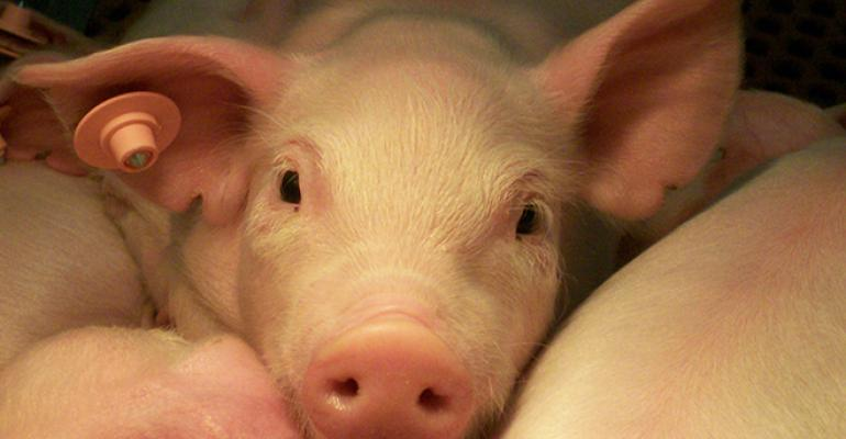 ARS scientists are studying a natural antimicrobial enzyme as a possible alternative to antibiotics for promoting pig health and growth