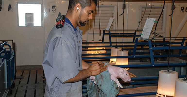 2015 Pork Master: Thomas Livestock Co., Broken Bow, Neb.
