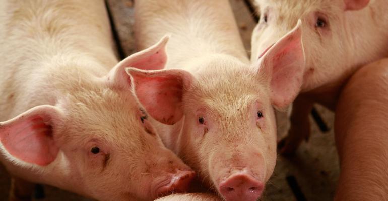 Hog supplies versus expectations