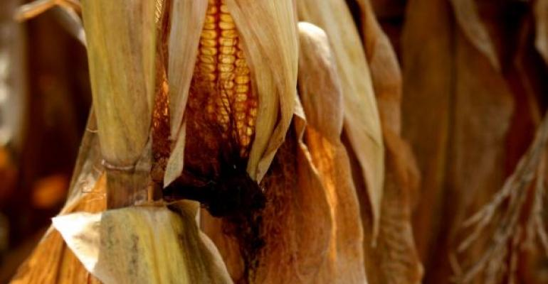 USDA lowered estimated national yield for corn to 1675 bu