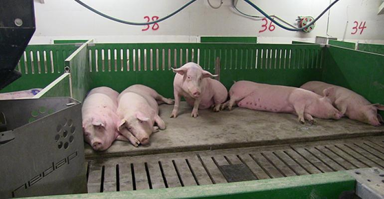 Once sows are acclimated to the group housing dynamics the herd hierarchy disappears and competition is gone