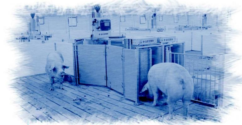 Contemplating gestating sow housing