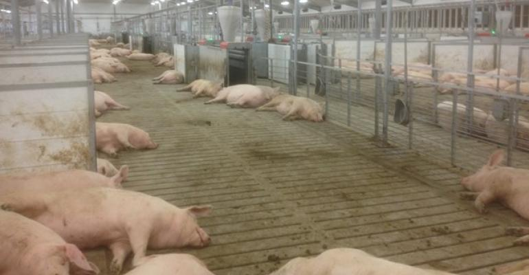 Electronic sow feeding: An alternative that's manageable