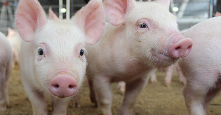 Environmental essentials: How to keep pigs comfortable through weaning