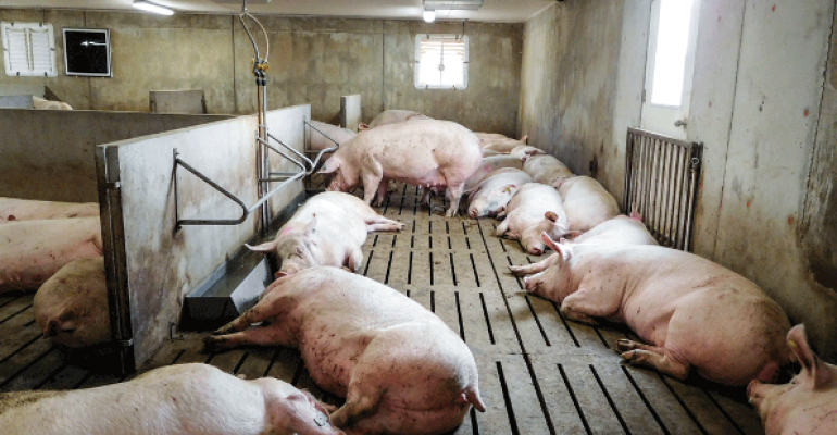 Options For Managing Group Housed Sows National Hog Farmer