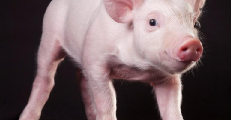 Pigs that are Resistant to incurable disease developed at University of Missouri Discovery about PRRS virus could save swine industry hundreds of millions of dollars