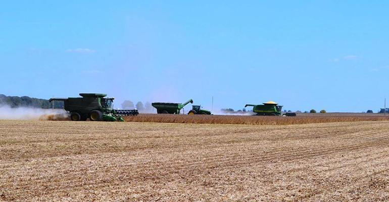 Energy values of soybean meal may depend on where beans are grown