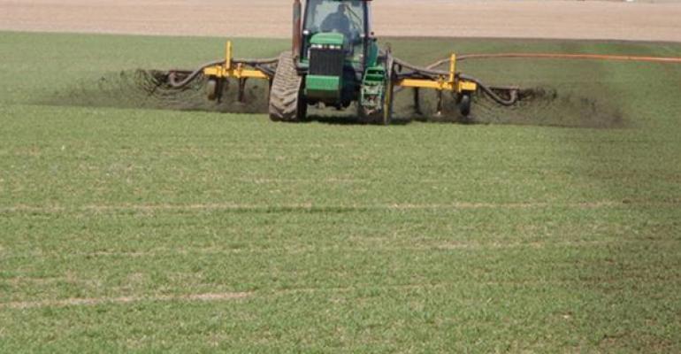 Liquid manure sidedressing on wheat