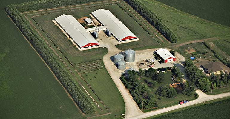 Hog producers can help themselves to prevent odors from interfering with the lives of their neighbors by observing the separation between their barns and the neighborrsquos homes Tree shelter belts can also help in absorbing odors from hog facilities
