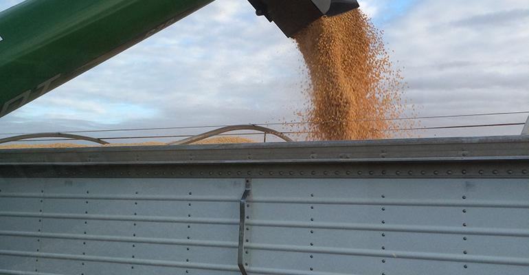 U.S. growers planning to plant more corn
