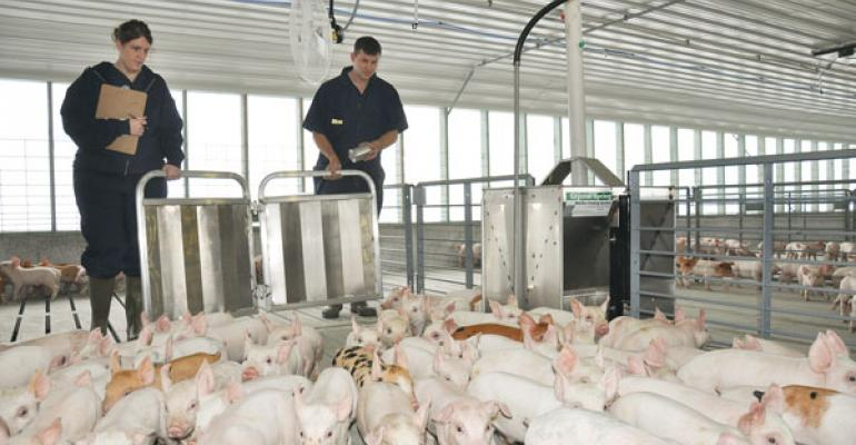 Swine antibiotic system is paramount