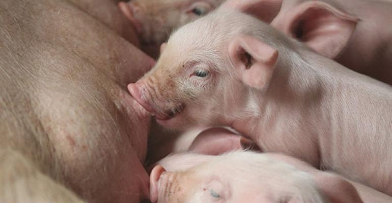 Are three recent viruses emerging hog disease threats?
