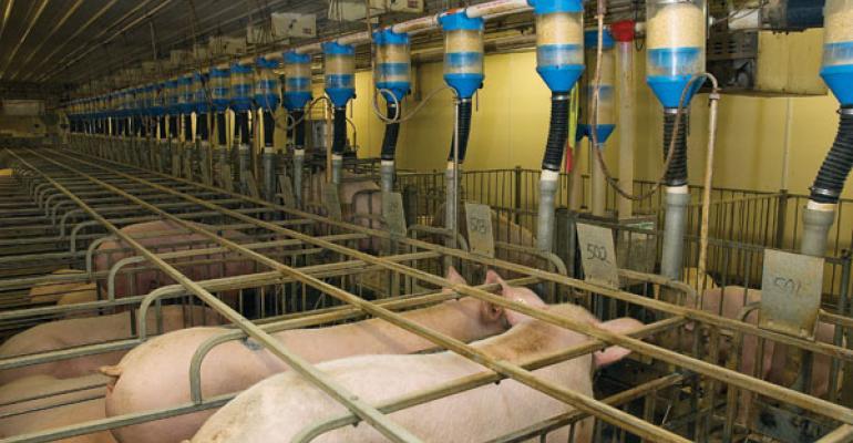 Hog market is steady as she goes