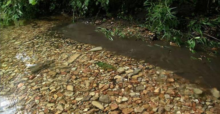 An example of the damage feral swine can have on water quality