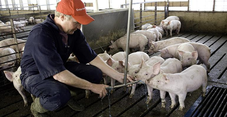 Salmonella is one of the most widespread enteric diseases affecting swine herds today If you suspect disease use diagnostic testing to help confirm