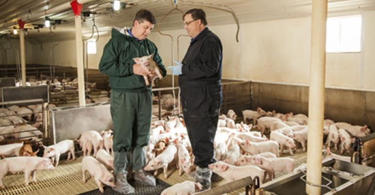 Merck Animal Health investing in swine vaccine innovation, manufacturing and people