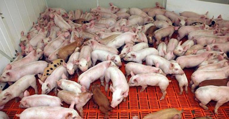 Piglet at Fitzsimmons farm