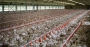 PoultryHouse_1540x800.png