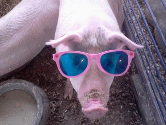 84. Fair Weather Pig by Duane Kelly