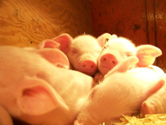 61. Chesany's First Litter by Paige Seymore