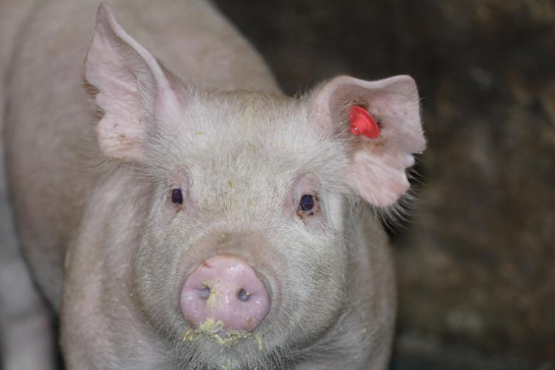 5. Prettiest Pig by Alaina Mousel