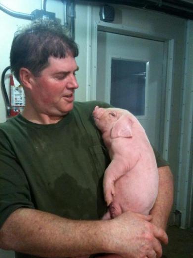 78. Beautiful Meishan Cross Pig by Ines Rodriguez