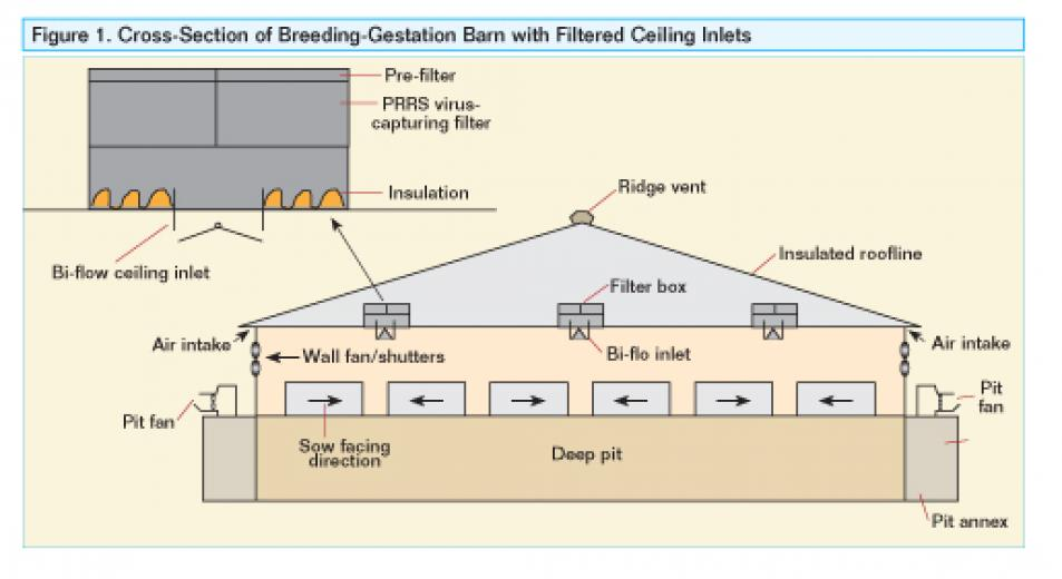 Diagram showing a cross-section of a breeding-gestation barn with filtered ceiling inlets.