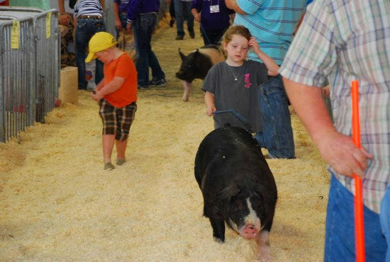 Youth Swine Show