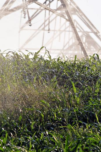 Irrigation Systems are Key to Nutrient Management
