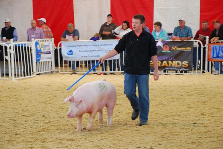 World Pork Expo Swine Shows