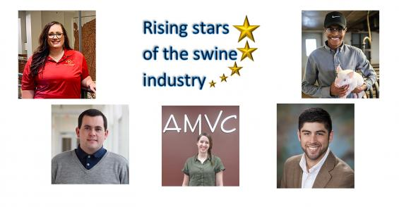 Rising stars of the swine industry