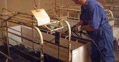 Worker powerwashing a hog barn