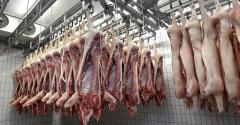 Pig Halves in a Slaughterhouse