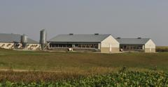 Hog Barn near soybean field