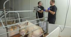 "It's been one heck of a week, but the swine industry stepped up and said, ""challenge accepted."""
