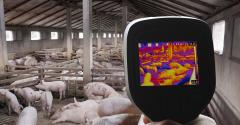 Handheld thermal imaging device being used on a pig farm