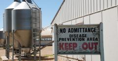 "A sign reading ""No Admittance Disease Prevention Area KEEP OUT"" outside of a hog barn by feed bins."