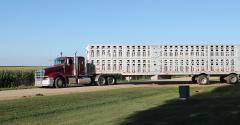 Livestock semi trailer leaving a farm yard
