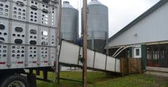 loading hogs