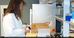 Senior author Dixie Mollenkopf working in the lab
