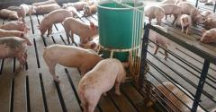 Lean hog futures managed to stage a dramatic and impressive upside breakout, providing a near-perfect opportunity for hog producers to seek protection from a sharp downturn in prices.