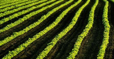 Field of small soybean plants. 1540x800